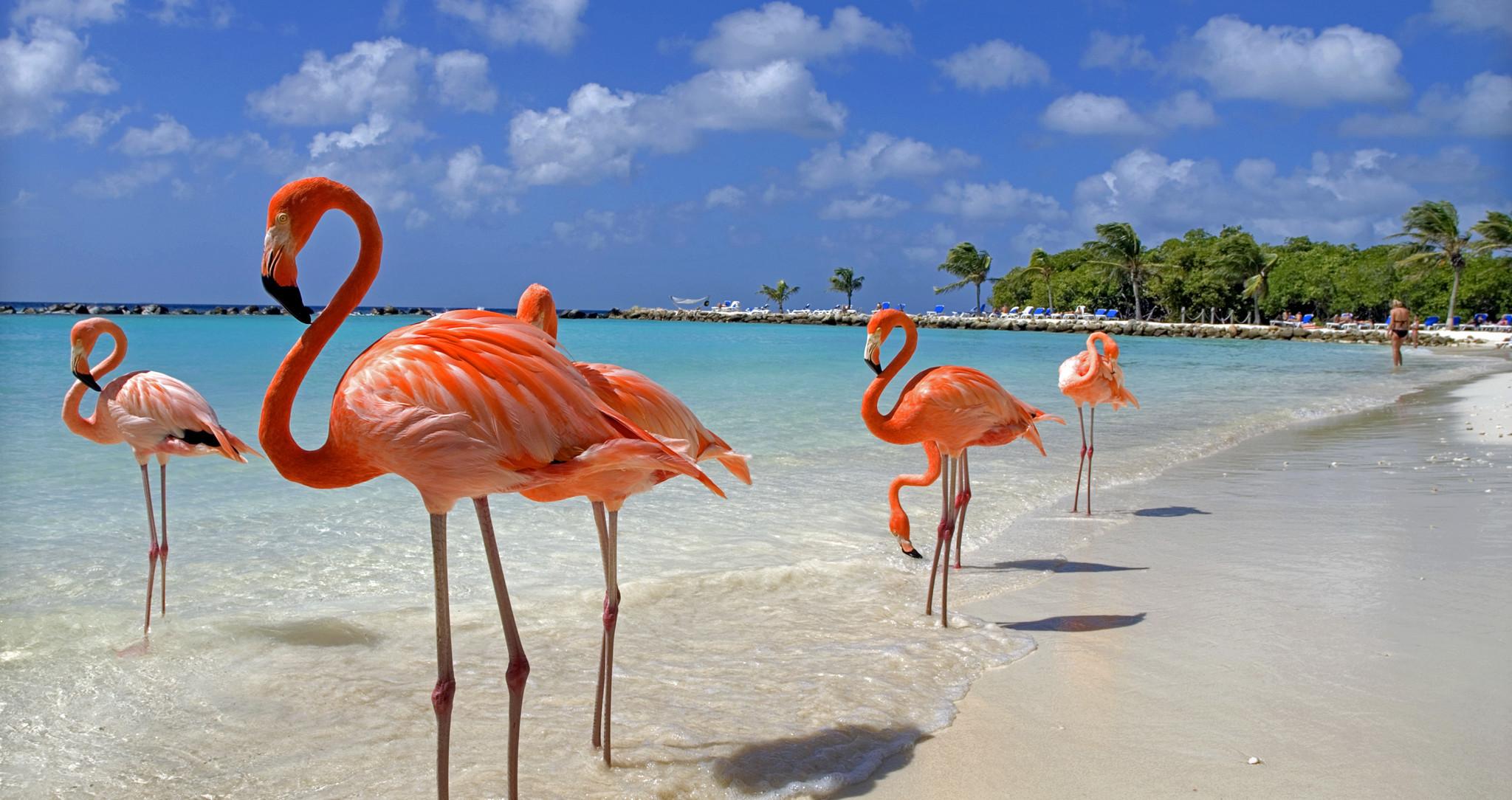Llamar a Aruba. Prefijo:297
